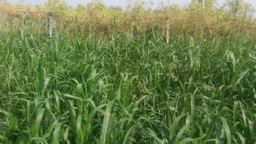 7 Acr Land For Farm House Near Hingna Nagpur