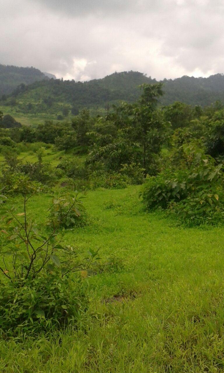 Jamkhed at Padali maharashtra