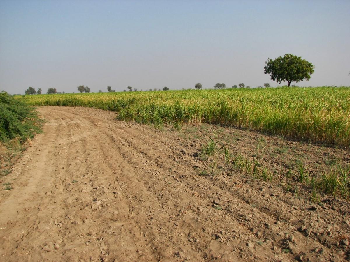 Agriculture Table Land at Sakuri