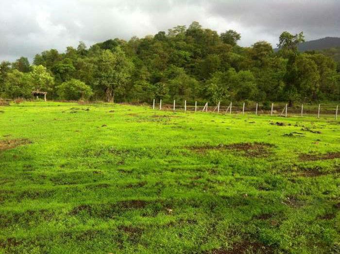 2200 Sq.Ft Farm House Plot At Virar Mumbai