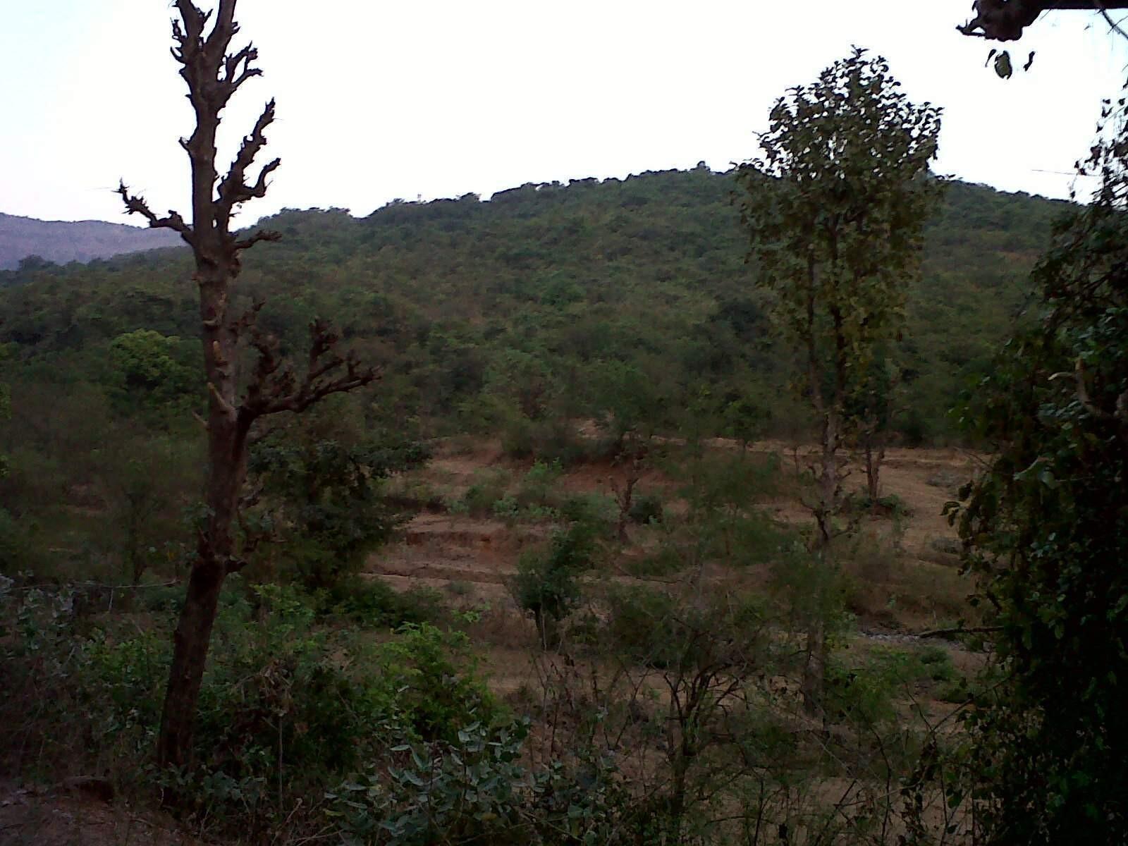 Land for Sale In Nagar at Hamidpur